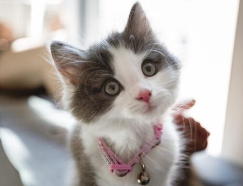 Don't Kit-nap Kittens!