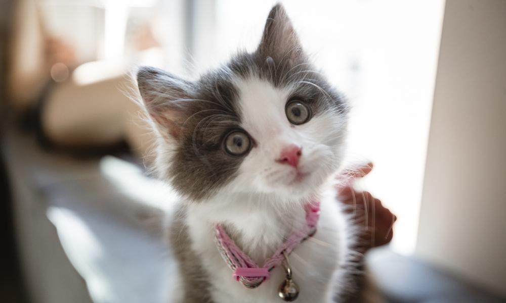 Don't Kit-nap Kittens! - Humane Animal Rescue