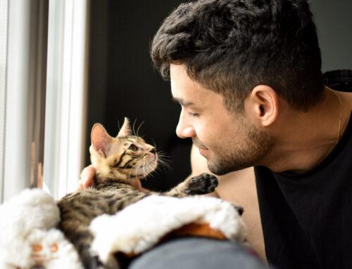 Kitten Care: 101